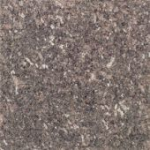 Shop Daltile Granite Tile